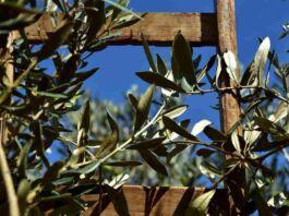confagricoltura taranto