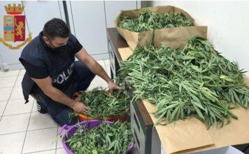Taranto: trovate piante di marijuana in un giardino pubblico