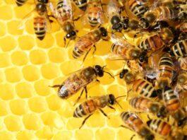 produzione del miele