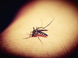 vaccino contro la malaria